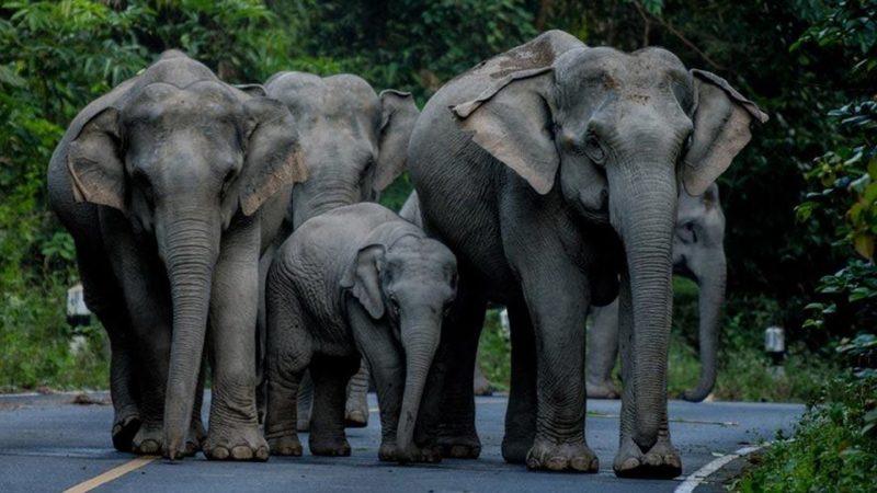 ฝันเห็นช้างหมายถึงอะไรกันนะ