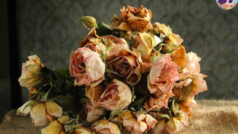 ฝันว่าเห็นดอกไม้เหี่ยวเฉา มีเกณฑ์โชคจะไม่ดีนะคะ