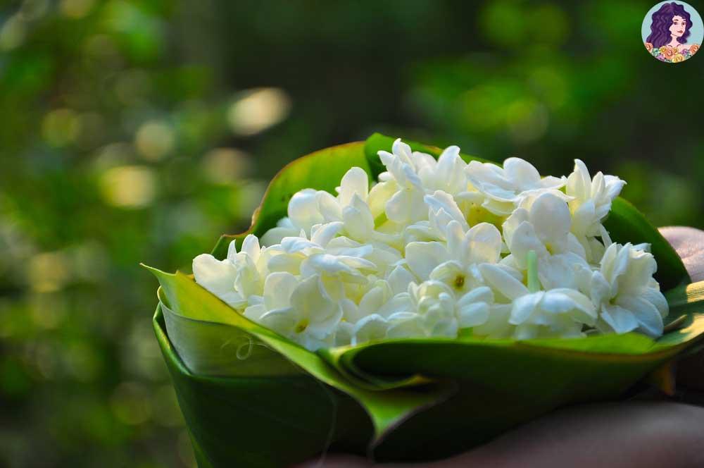ฝันเห็นดอกมะลิ เจอแต่สิ่งราบรื่น