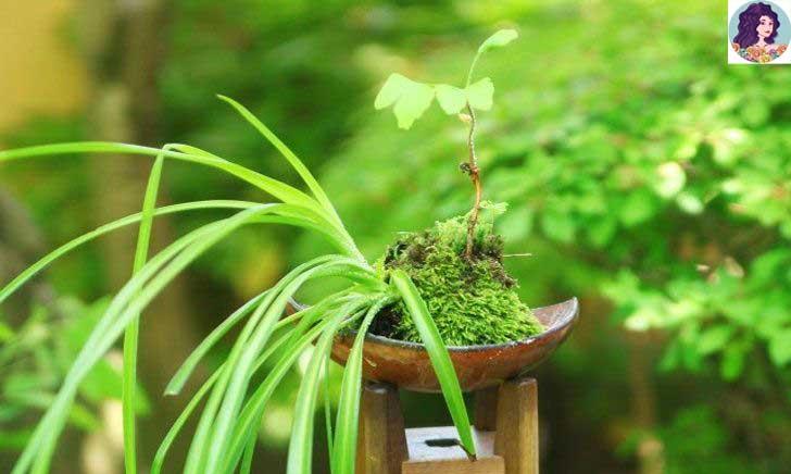 ต้นไม้ที่คนญี่ปุ่นแนะนำว่าเสริมฮวงจุ้ย!